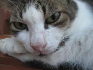 cat-watchcat-watch-300x225