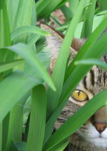 stalk stalking