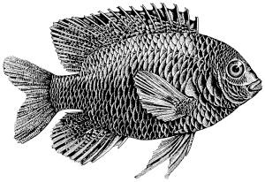 fish-300x206