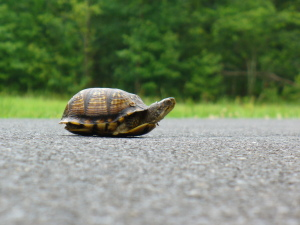 turtle slow road street