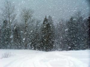 snowstorm snow storm