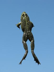 frog jump jumping